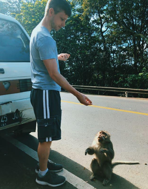 debtfreeclimb monkey